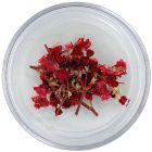Flori uscate - roșii